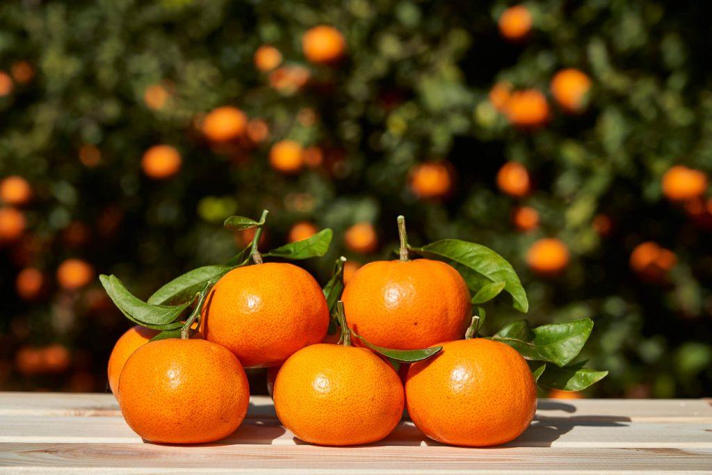 La mandarina Spring Sunshine se presenta con todo su esplendor en su nueva web